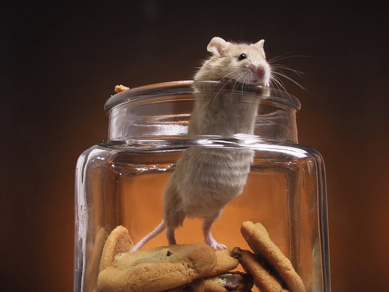 mysz z ciasteczkami